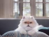 tim-gatto
